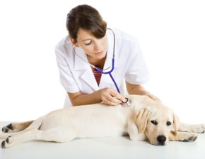 Neurological Diseases In Dogs